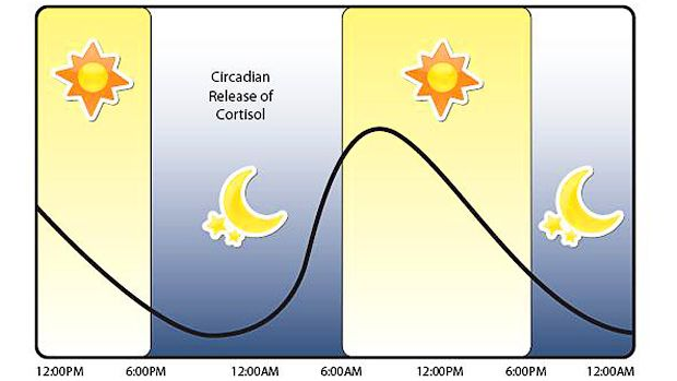 circadian-release-of-cortisol
