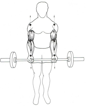 barbell curl 2