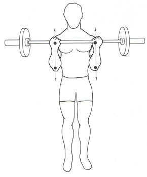barbell curl 3