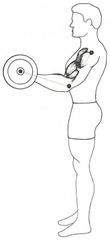 barbell curl 4