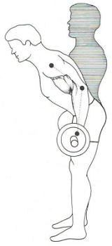 barbell curl 7