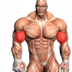 biceps_featured