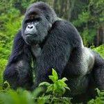 Primatların Muhteşem Kuvveti