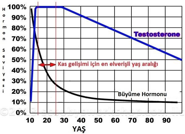testosterone-growth-hormone-chart-age